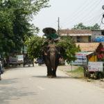 Belandener Elefant im Chitwan Nationalpark