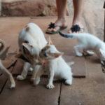 Katzenbabys mit Mutter am Anjuna Strand in Goa