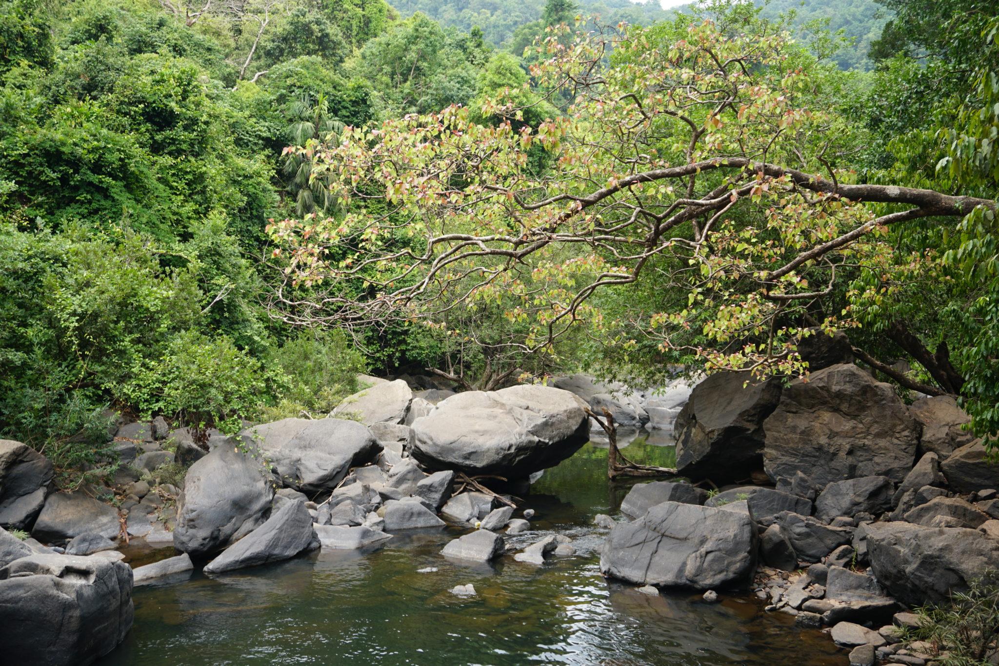Fluss nahe der Dudhsagar Wasserfälle in Goa