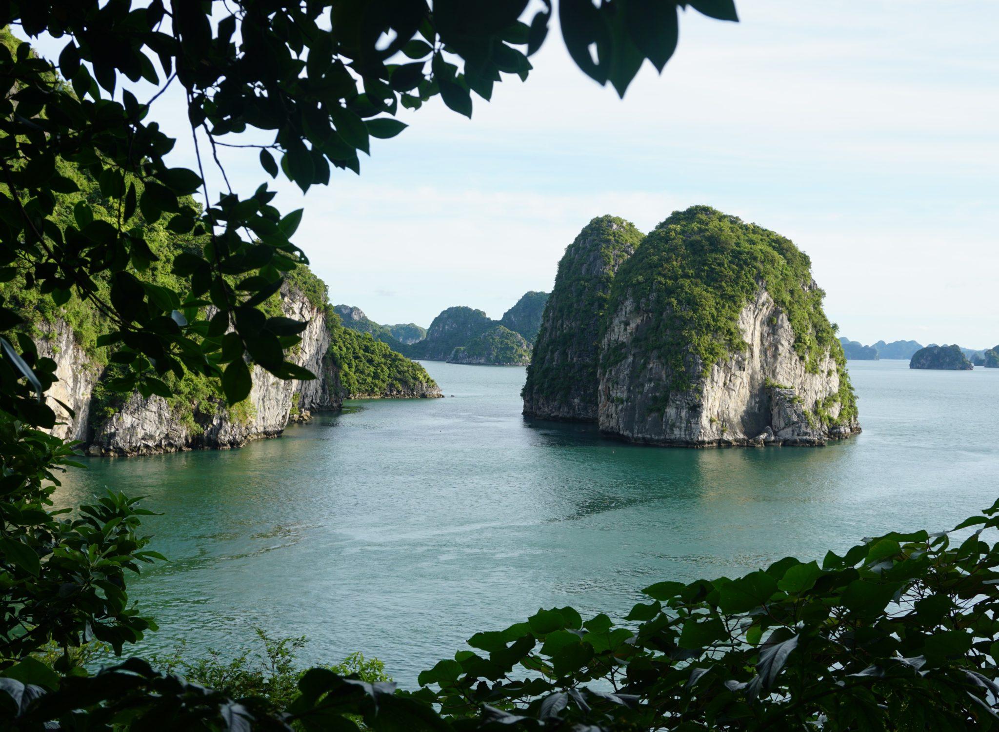 Panoramanlick durch Blätter auf die Halong-Bucht