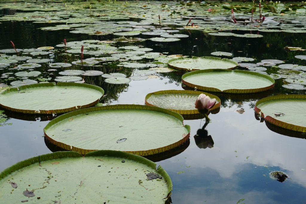 Seerosen-Teich in Gardens By The Bay Singapore