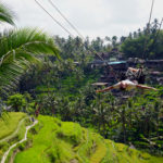 Marcel auf Giant Swing in den Reisfeldern Balis