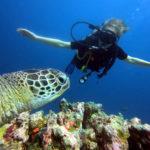 Mona beim Tauchen mit Schildkröte m Vordergrund.