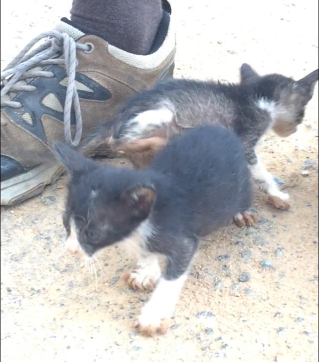 Foto von zwei Katzenbabies an Marcels Schuh.