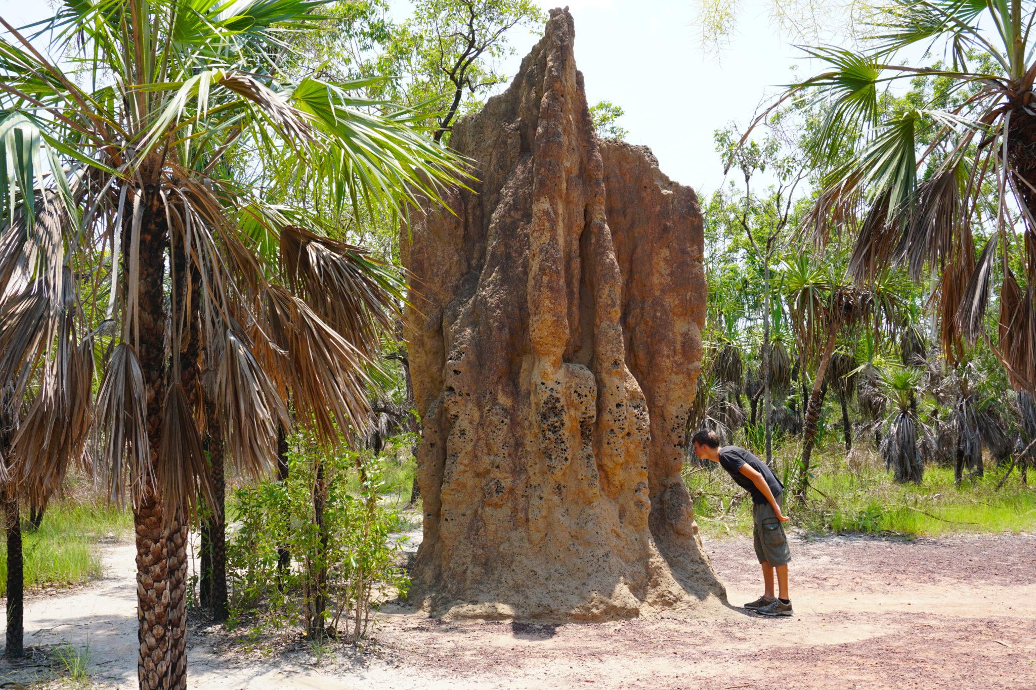 Marcel vor einer Termiten-Kathedrale im Litchfield NAtionalpark