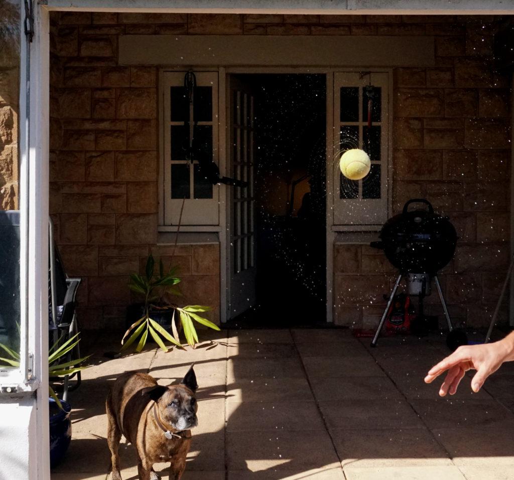 Foto: Freizeit in der Isolation. Foto mit nassem Ball.