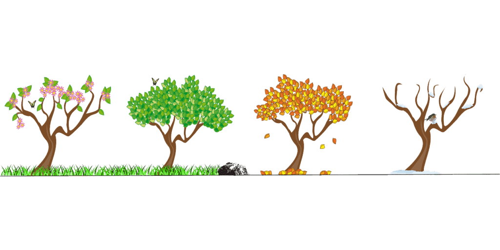 Vektorgrafik: Baum zu verschiedenen Jahreszeiten