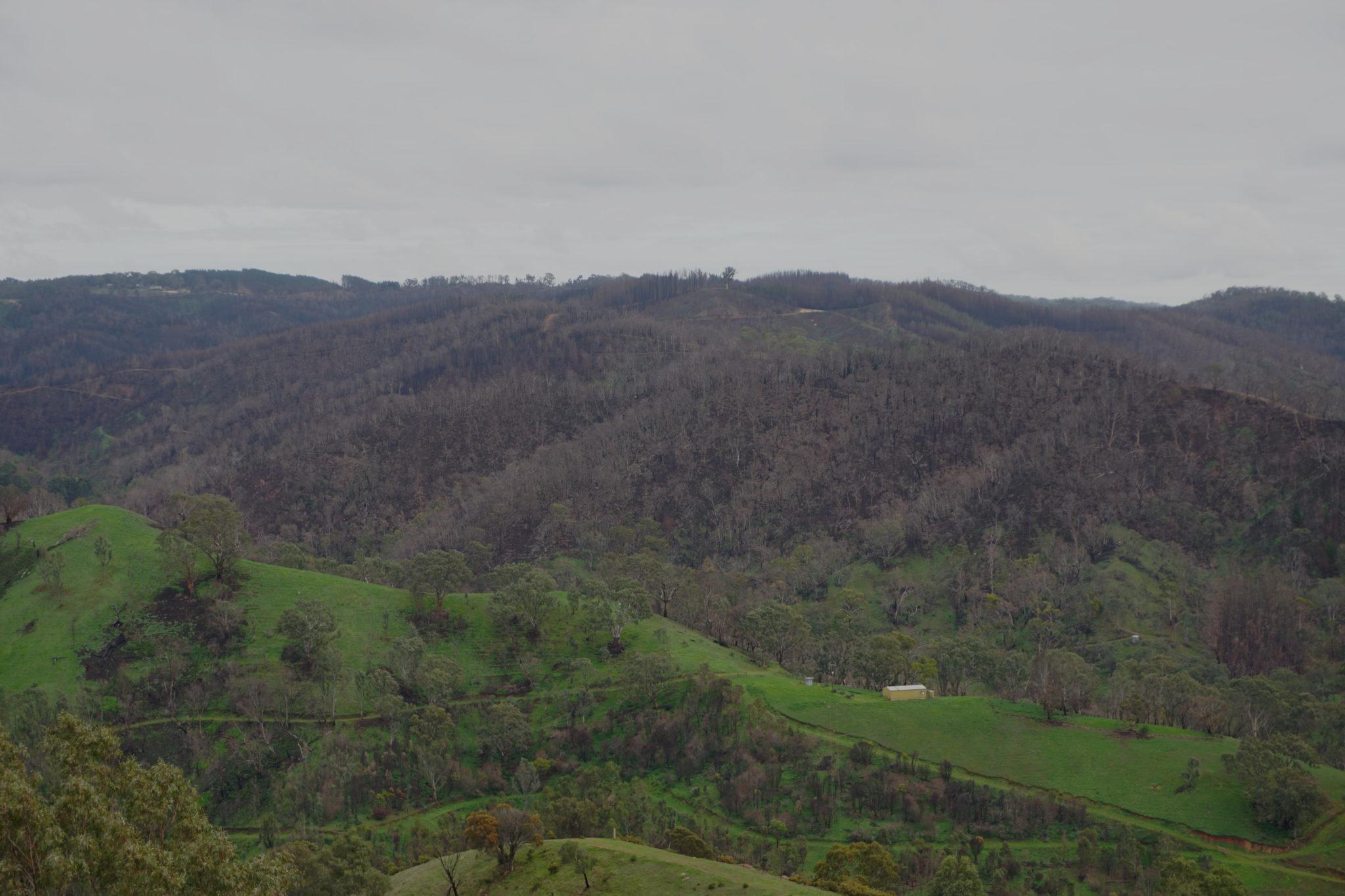 Abgebrannte Berge in den Adelaide Hills