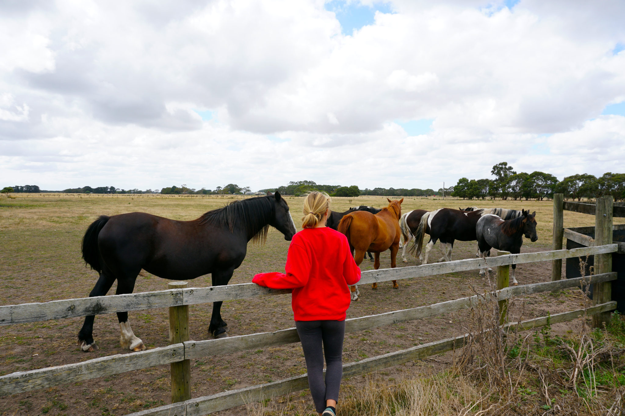 Mona mit Pferden in Bessiebelle